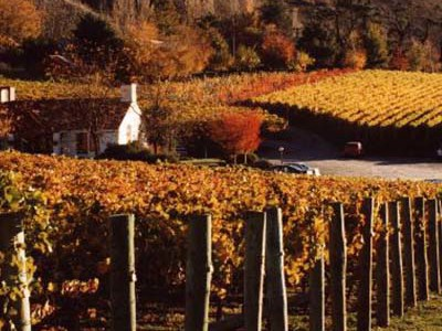 wine tours in queenstown new zealand
